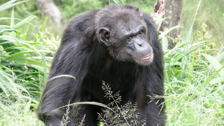 animalplanet.se - Escape to Chimp Eden