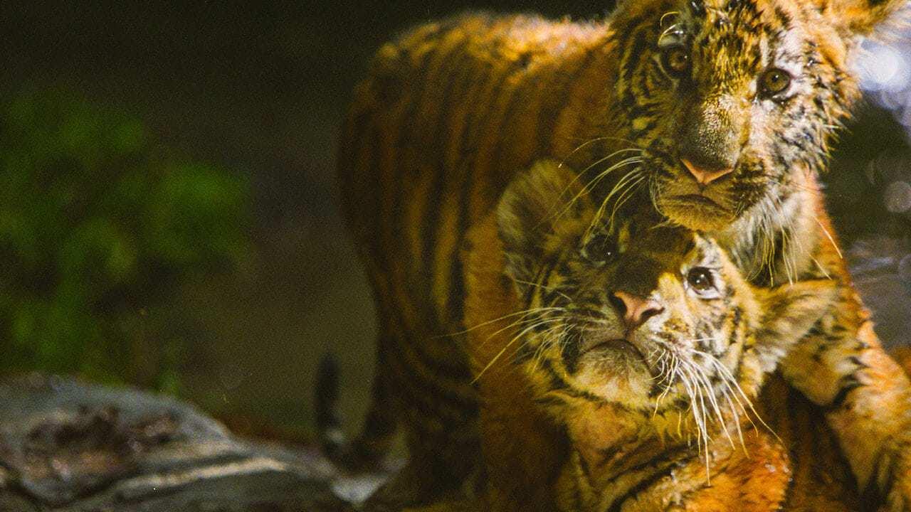 Två tigerbröder