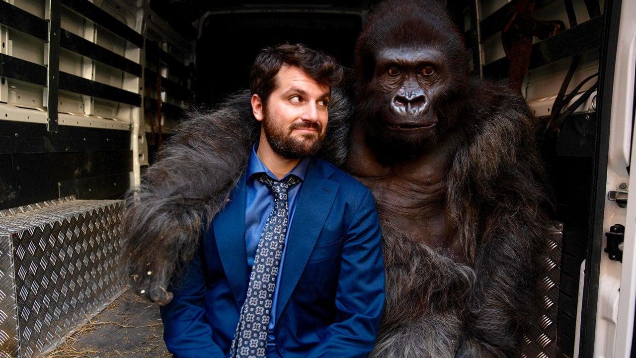 C More First - Se upp för gorillan